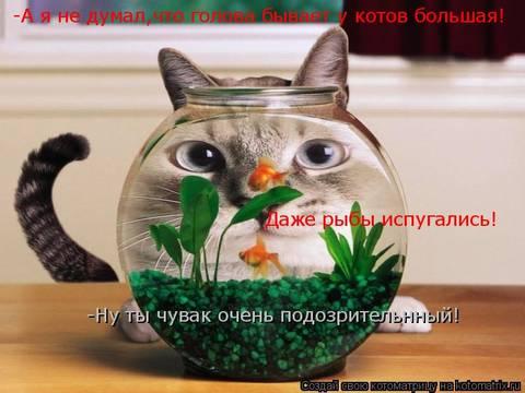 http://sf.uploads.ru/t/sboyZ.jpg