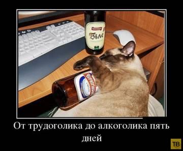 http://sf.uploads.ru/t/vpGcU.jpg
