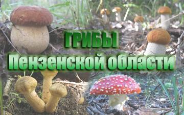 http://sf.uploads.ru/tvoye.png